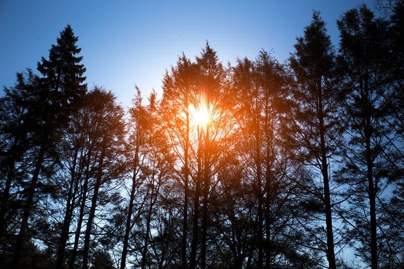 Nascer do sol bonito na manhã sobre a árvore no tempo de inverno imagens de stock