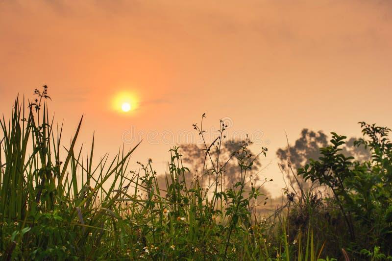 Nascer do sol bonito no inverno fotografia de stock royalty free