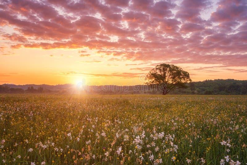 Nascer do sol bonito no vale de florescência, na paisagem cênico com as flores crescentes selvagens e no céu nebuloso da cor fotos de stock royalty free
