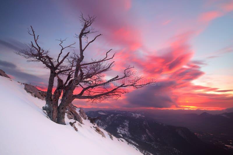 Nascer do sol bonito sobre uma árvore solitário na neve fotos de stock royalty free