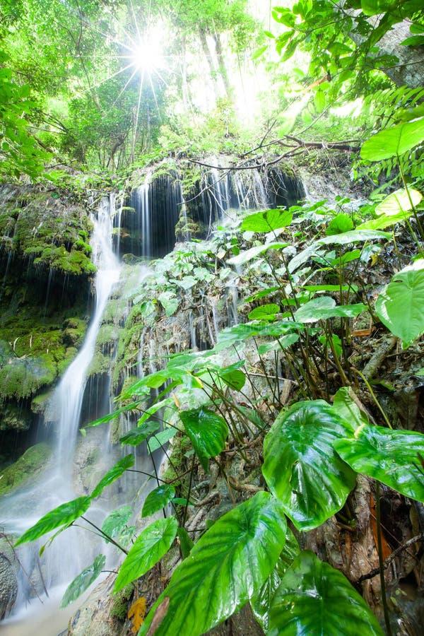 Nascer do sol brilhante que brilha através dos ramos de árvores tropicais na cachoeira e na planta luxúria Floresta tropical anti imagens de stock royalty free