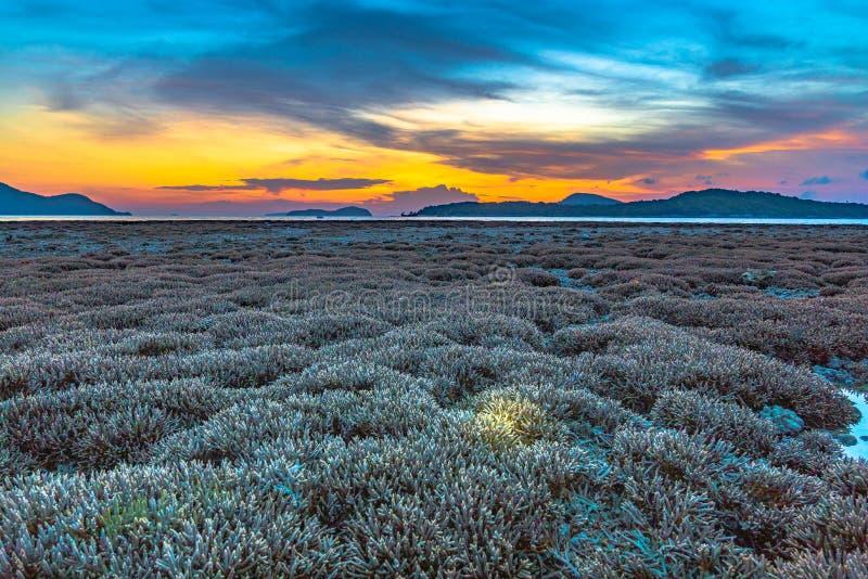 nascer do sol do cenário acima do recife de corais O recife de corais emerge da água a nível reduzido da água fotos de stock royalty free
