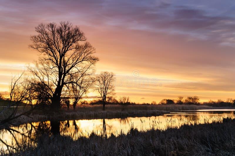 Nascer do sol com as nuvens ardentes amarelas sobre uma lagoa selvagem cercada por árvores na manhã do outono fotografia de stock royalty free