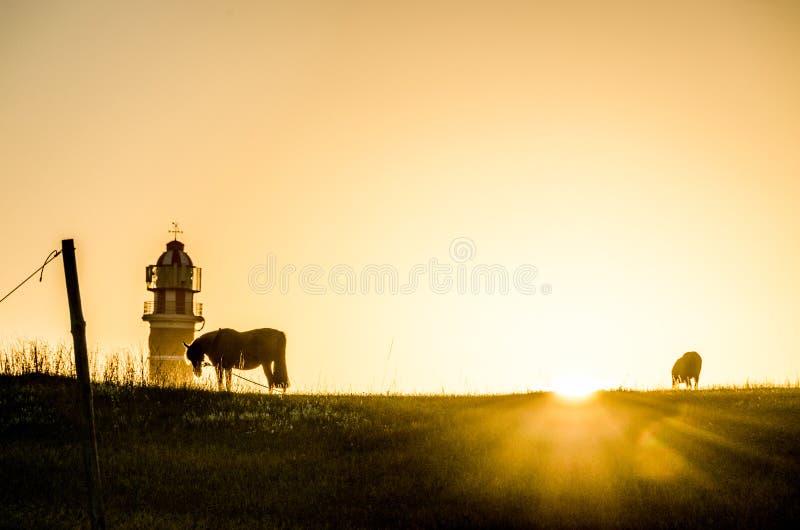 Nascer do sol com cavalo e farol imagens de stock
