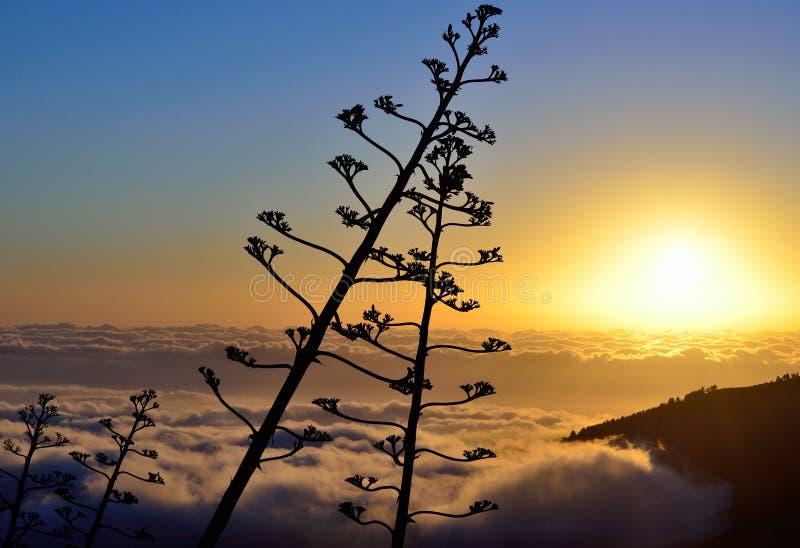 Nascer do sol com flores da agave foto de stock royalty free