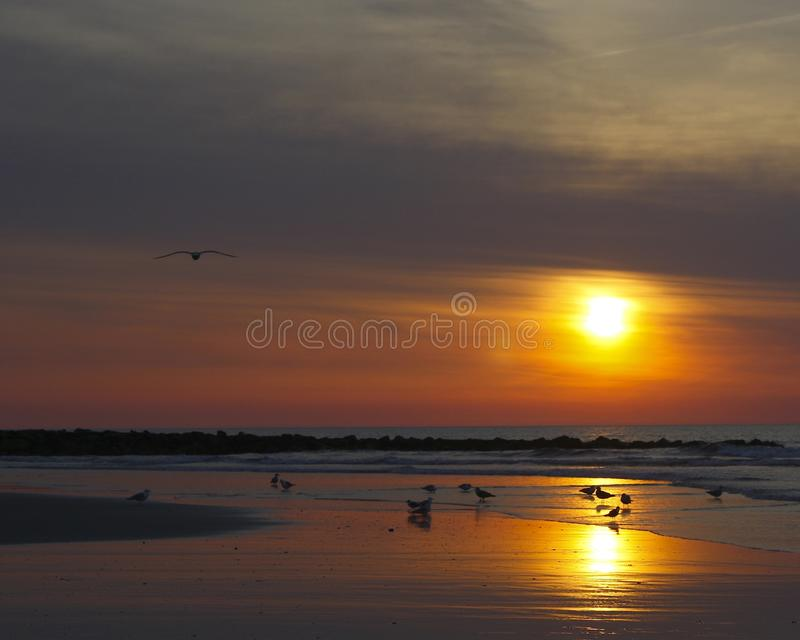 Nascer do sol com gaivota de mar imagens de stock