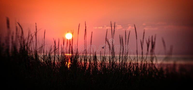Nascer do sol com grama e pássaro foto de stock