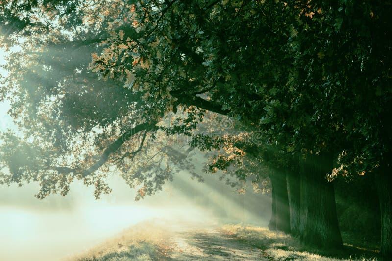 Nascer do sol com raios no fundo de um trajeto misterioso nevoento mim imagens de stock royalty free