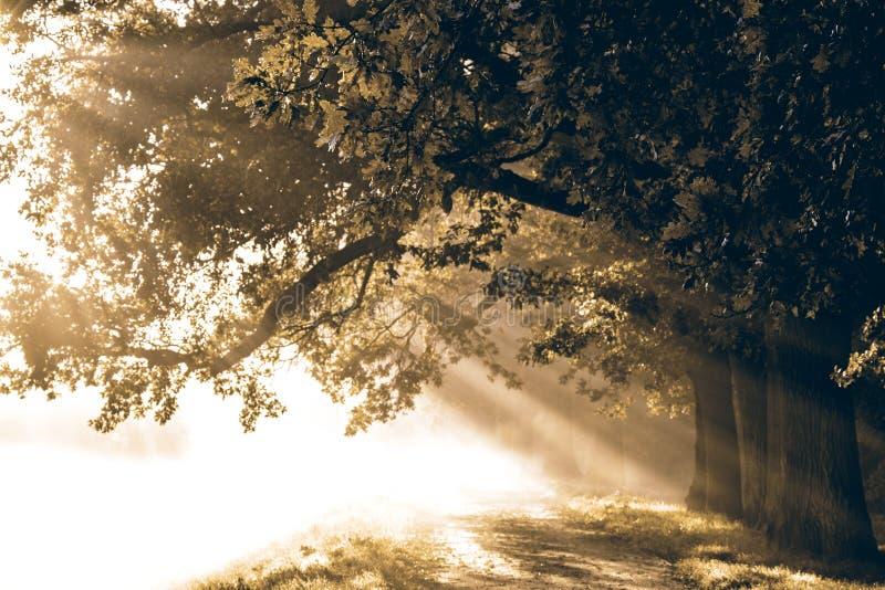 Nascer do sol com raios no fundo de um trajeto misterioso nevoento mim foto de stock royalty free