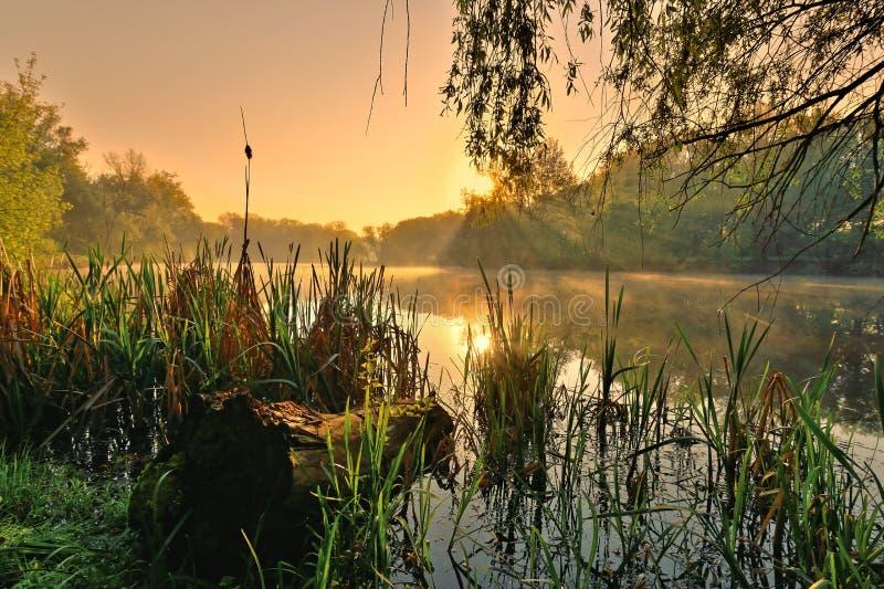 Nascer do sol cor-de-rosa sobre o rio imagens de stock