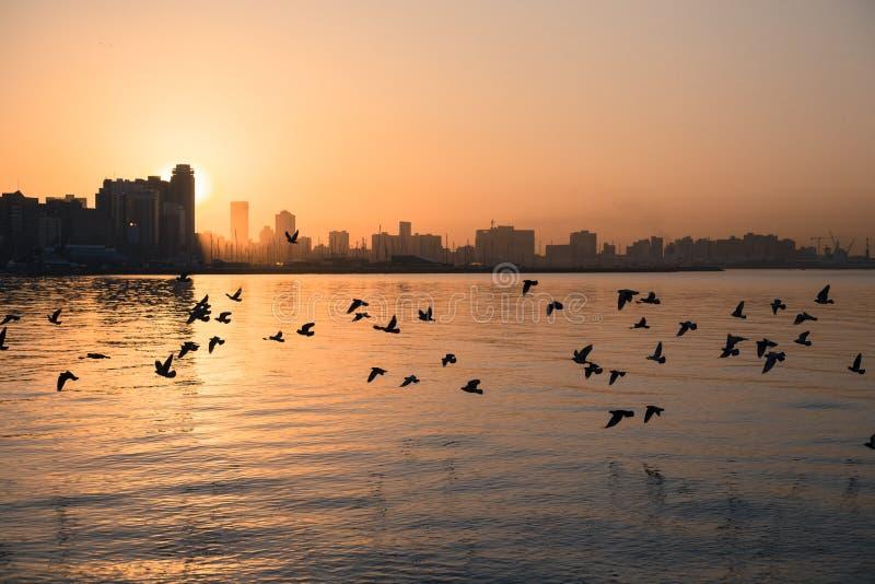 Nascer do sol da cidade de Durban imagens de stock