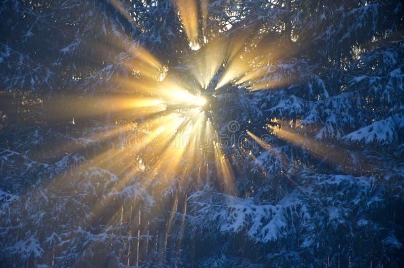 Nascer do sol da manhã do inverno e fundo da névoa fotografia de stock