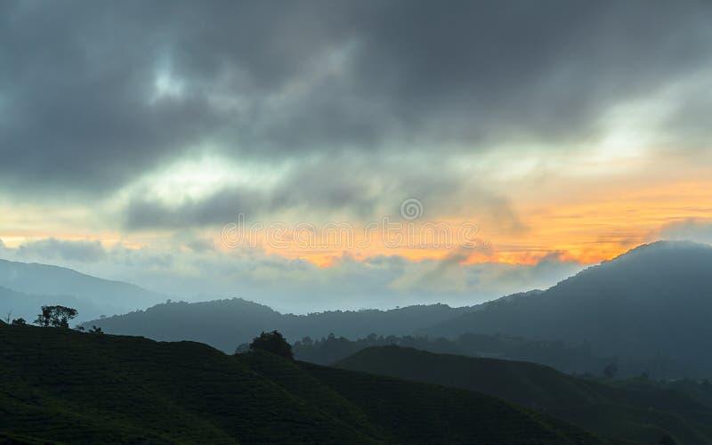 Nascer do sol da manhã na plantação de chá fotografia de stock