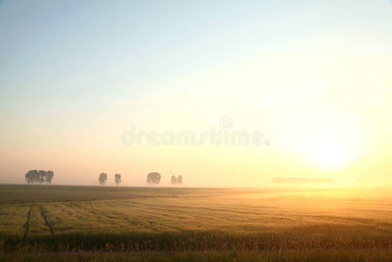Nascer do sol da mola sobre um campo da grão fotografia de stock