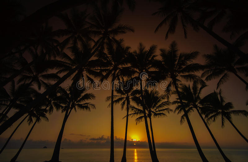 Nascer do sol da palma de coco imagens de stock royalty free