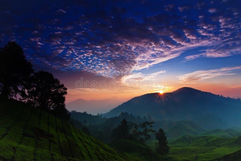 Nascer do sol da plantação de chá imagem de stock