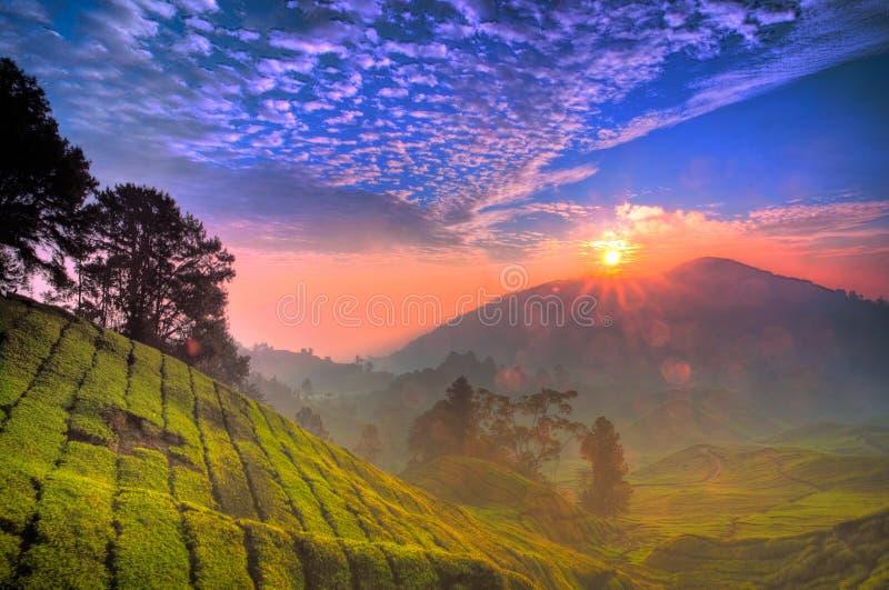 Nascer do sol da plantação de chá de HDR fotografia de stock royalty free