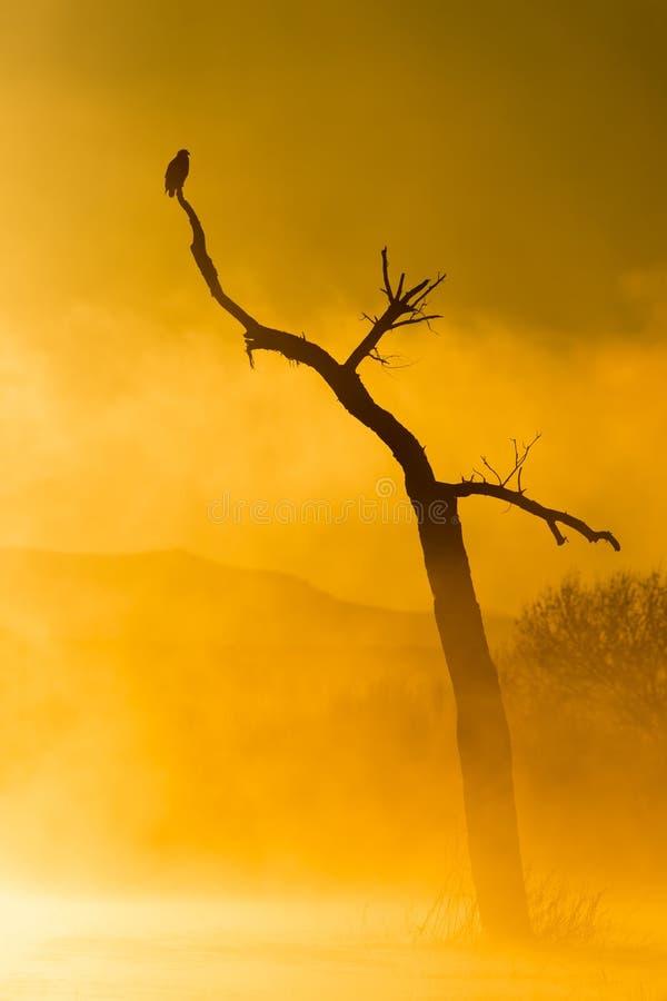 Nascer do sol de Bosque foto de stock