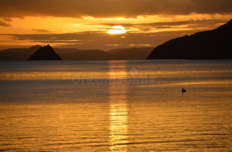 Nascer do sol de dezembro com o pelicano em Bahia Concepcion, Baja California, México imagem de stock