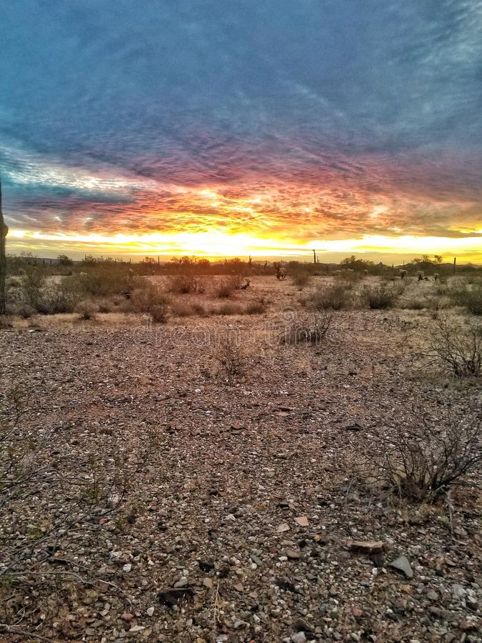 Nascer do sol do deserto de Sonoran fotos de stock