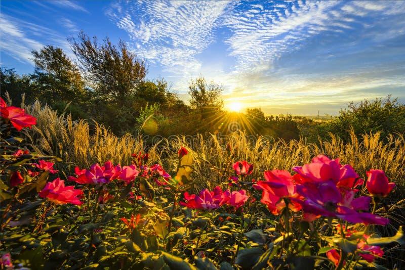 Nascer do sol do quintal imagens de stock royalty free