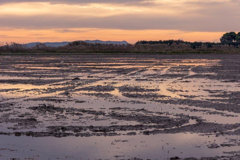 Nascer do sol dourado bonito em um campo inundado no parque natural de Albufera, Valência, Espanha, Europa Mágico e natural imagem de stock royalty free