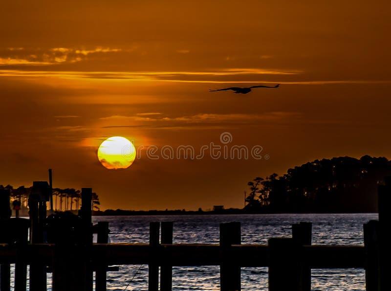 Nascer do sol e a águia pescadora fotografia de stock