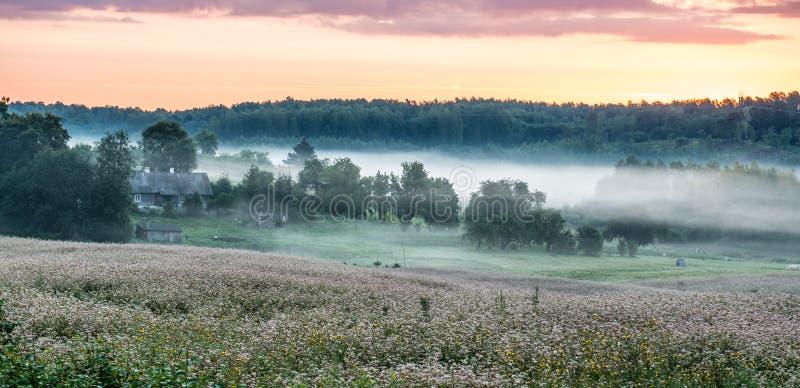 Nascer do sol e névoa perto da floresta fotos de stock