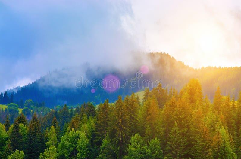 Nascer do sol e névoa sobre a floresta do pinho nas montanhas fotografia de stock