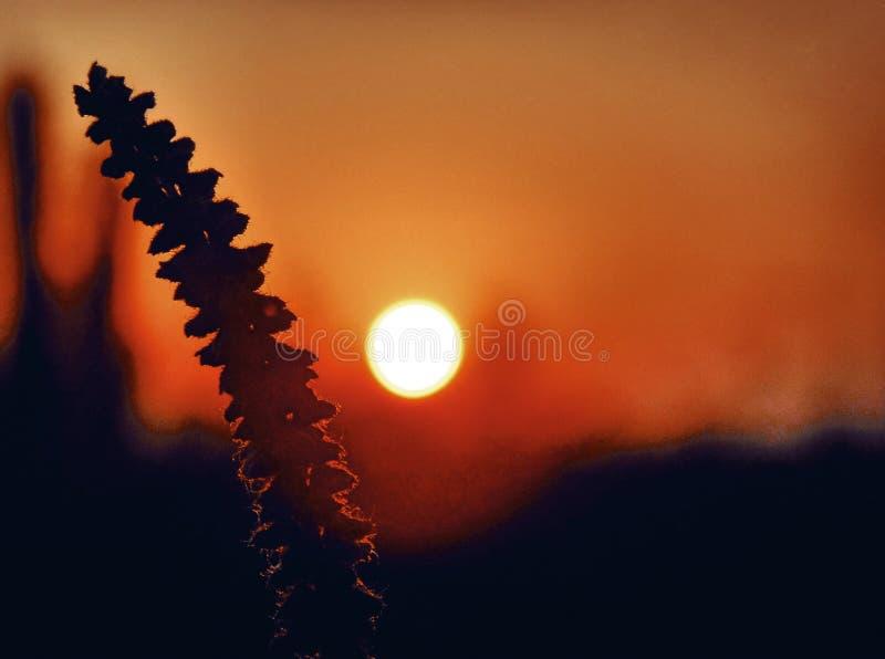 Nascer do sol e verão fotos de stock