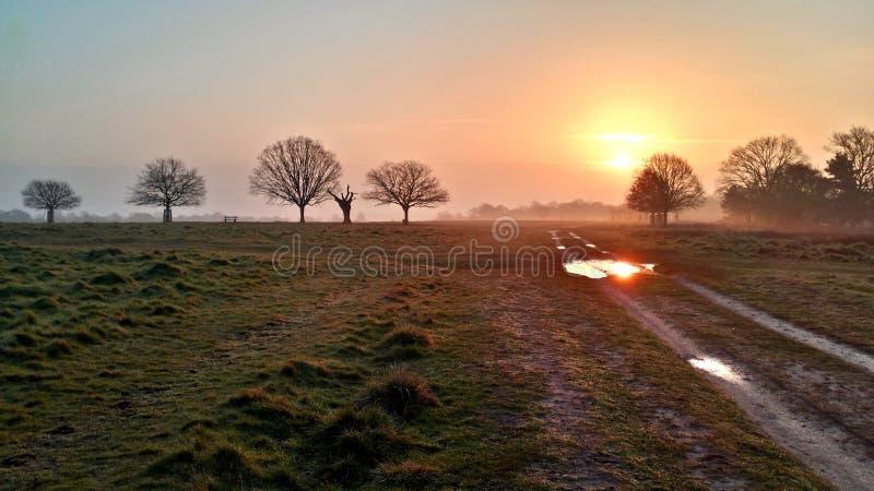 Nascer do sol em Richmond Park fotos de stock royalty free