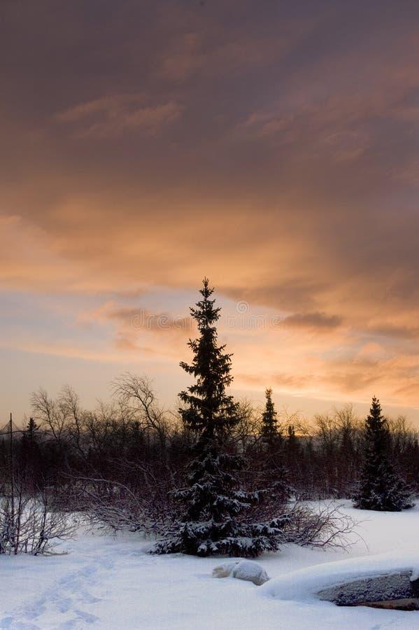 Nascer do sol em tundra-1 fotografia de stock