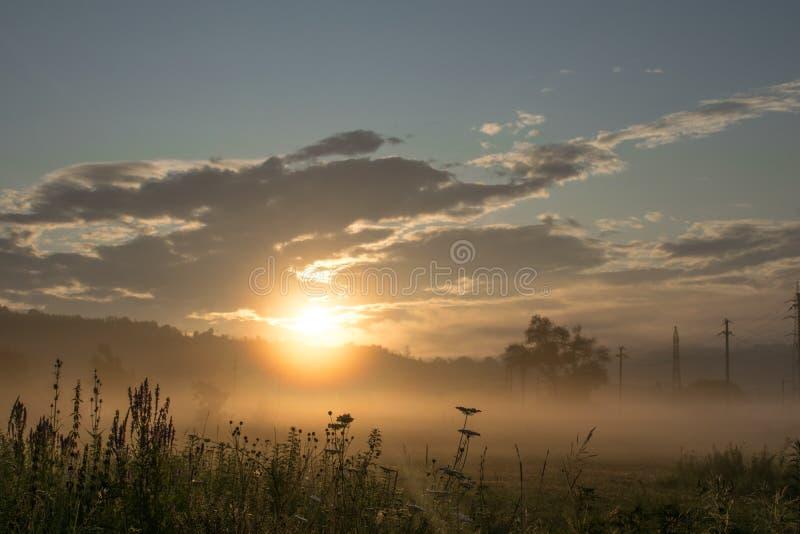 Nascer do sol em um campo com lotes da vegetação, das árvores e dos polos da eletricidade névoa a rés do chão Parece ser uma área foto de stock royalty free