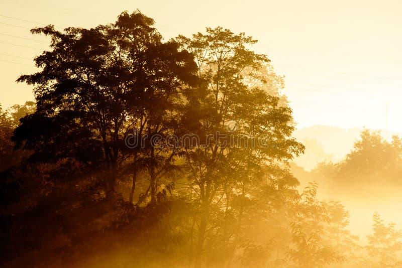 Nascer do sol em um fundo de uma paisagem enevoada com árvore fotografia de stock
