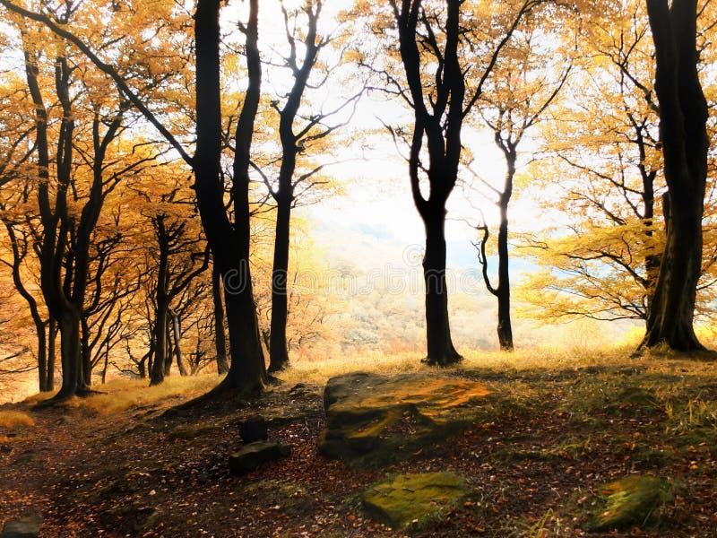 Nascer do sol enevoado da floresta do outono da manhã foto de stock