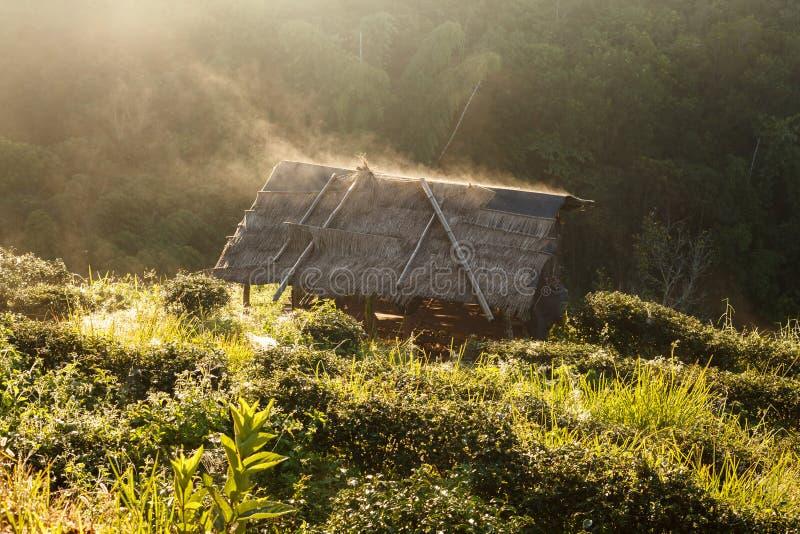 Nascer do sol enevoado da manhã na plantação e na cabana de chá em Doi Ang Khang fotos de stock royalty free