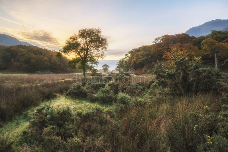 Nascer do sol enevoado nevoento bonito do outono sobre o surroundin do campo foto de stock