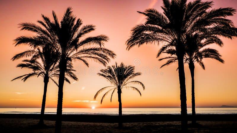 Nascer do sol entre as palmas pelo mar Mediterrâneo em Cullera, Valência foto de stock royalty free