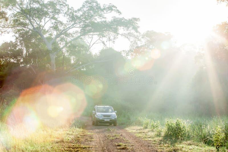 Nascer do sol fantástico que brilha através das árvores selvagens na pastagem e do carro de prata de SUV na estrada de terra no l fotos de stock