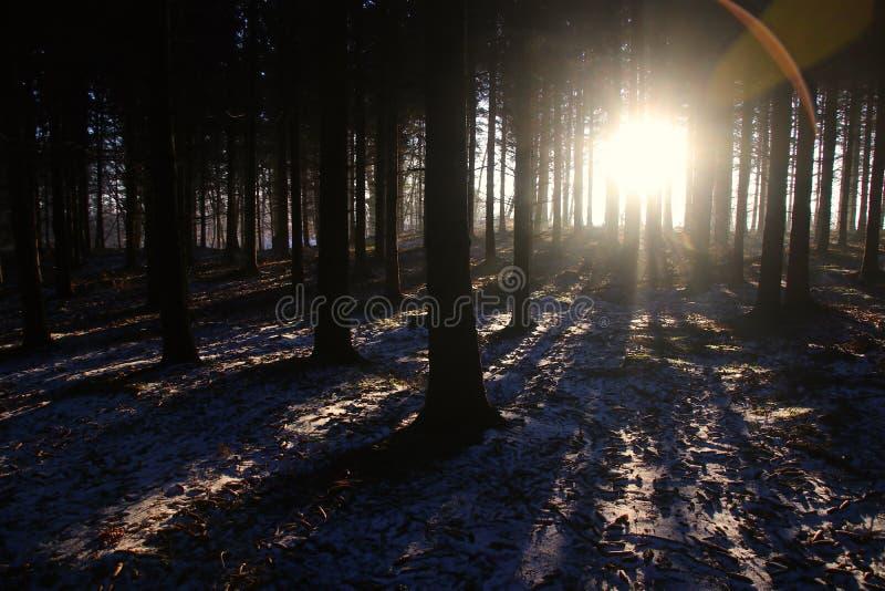 Nascer do sol fascinante cedo na floresta imagens de stock