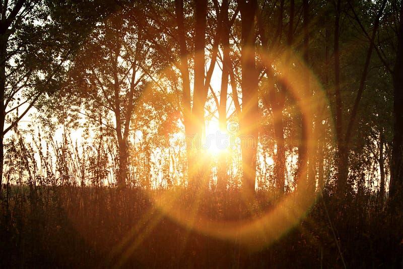 Nascer do sol na floresta fotos de stock royalty free