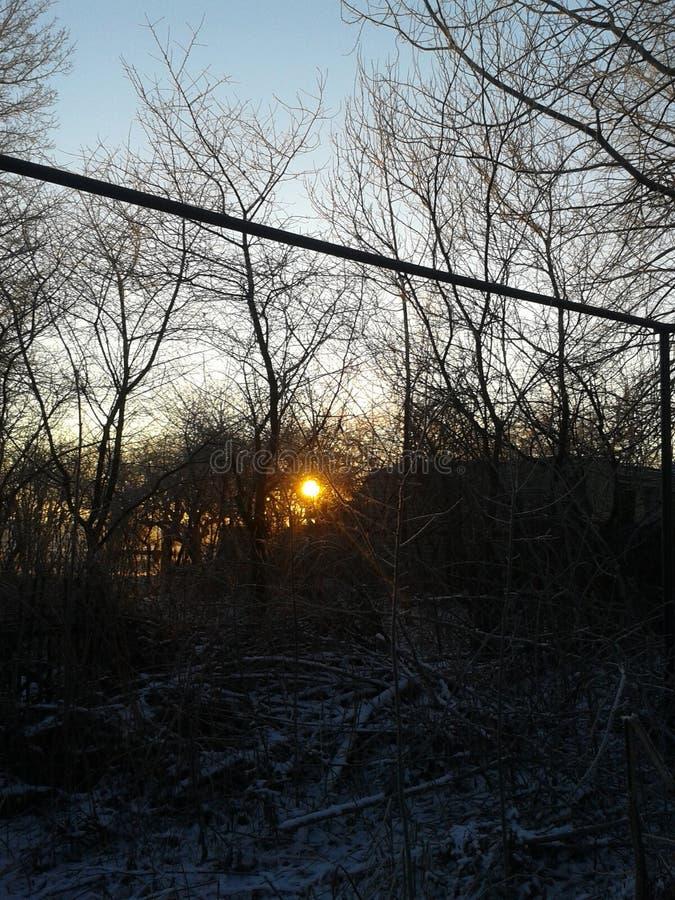 Nascer do sol na floresta do inverno fotografia de stock