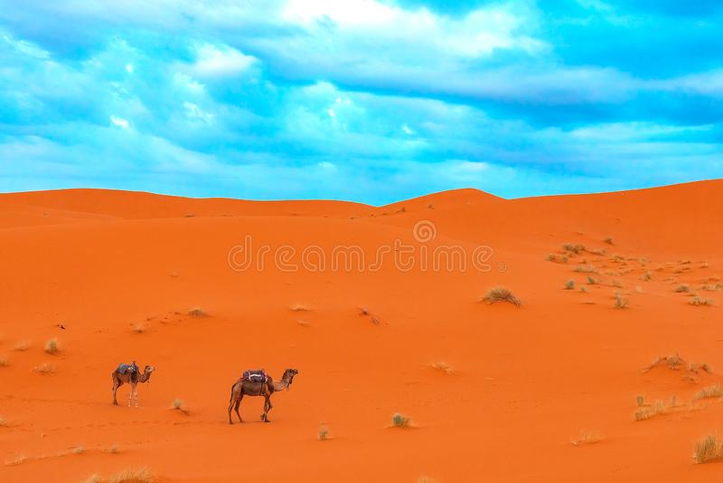 Nascer do sol na parte ocidental de Sahara Desert em Marrocos fotografia de stock