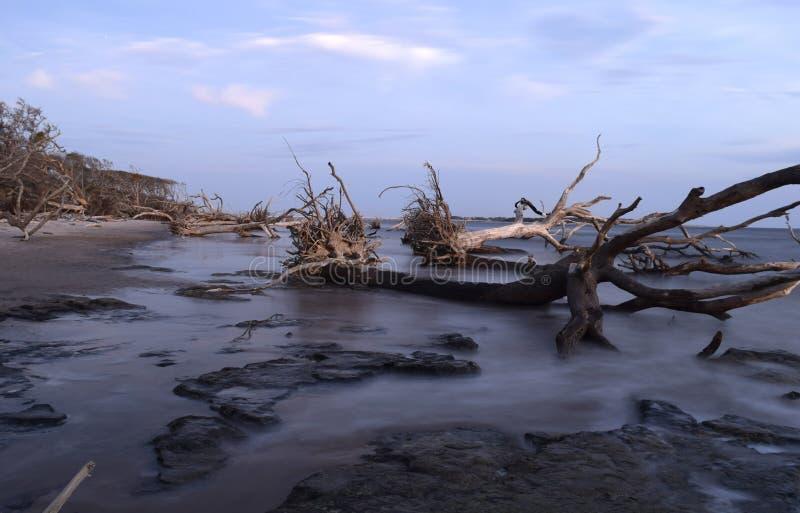Nascer do sol na praia 3 da madeira lançada à costa fotos de stock