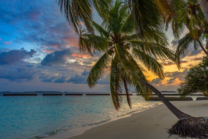 Nascer do sol na praia tropical em palmeiras de Maldivas e em água de turquesa fotos de stock