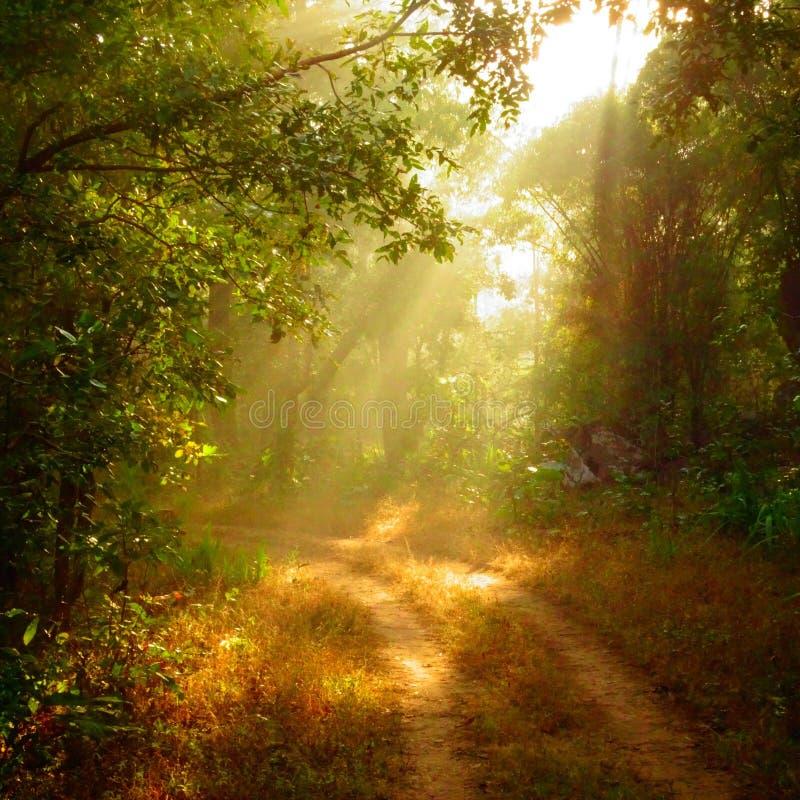 Nascer do sol na selva do kanha imagem de stock