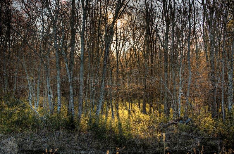 Nascer do sol nas madeiras fotografia de stock royalty free