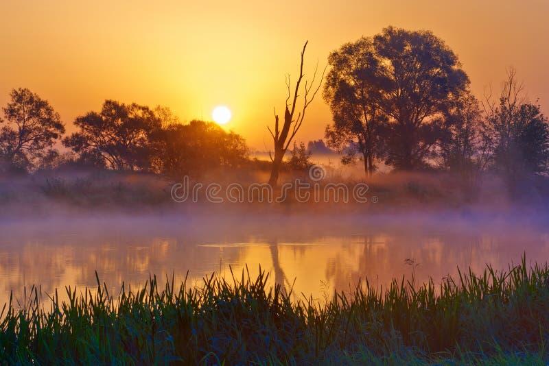 Nascer do sol nevoento bonito sobre o rio de Narew. imagens de stock