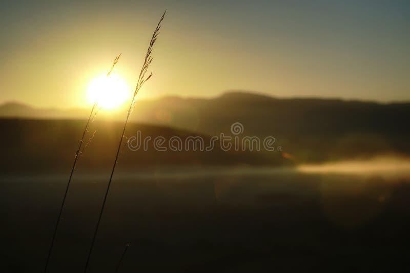 Nascer do sol nevoento com haulm imagens de stock