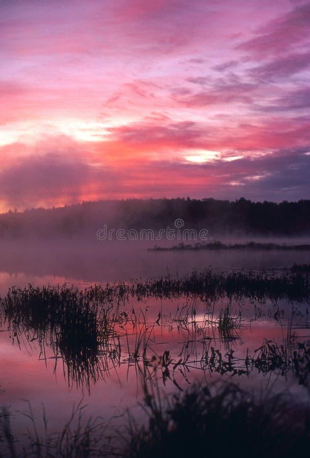 Nascer do sol nevoento na lagoa imagem de stock